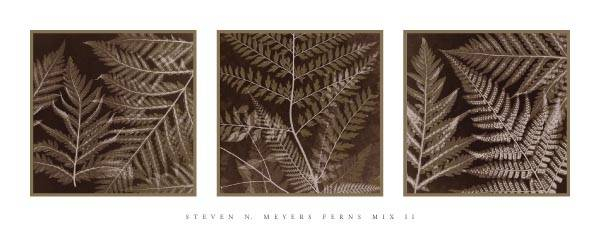 FERNS MIX II